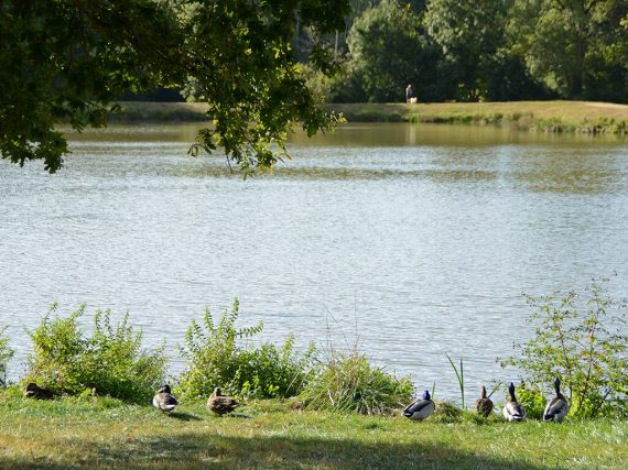 peche lac du jaunay